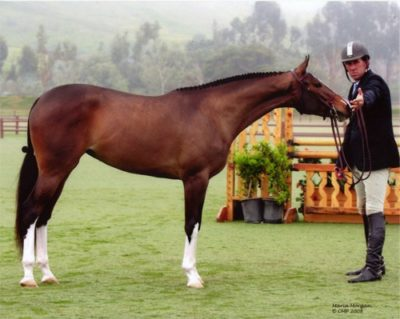 Archie Cox and WOW owned by Leslie Nelson National Champion 2008 2 Year Old Hunter Breeding Photo Captured Moment Photography