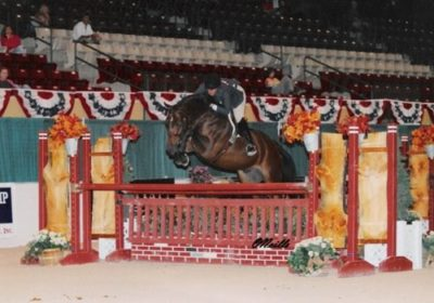 Quality Time owned by Laura Wasserman 2006 USEF National Champion Green Conformation Hunters Photo ONeills