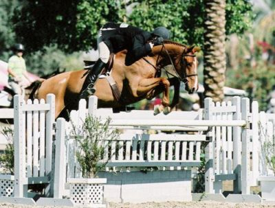 Archie Cox and Fenwick owned by Amy Brubaker 2006 USEF National Champions Regular Conformation Hunters 2006 Year-End PCHA Champions Regular Conformation Hunters Photo Flying Horse