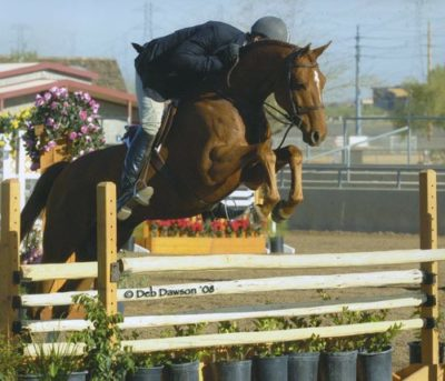Archie Cox and Pringle Champion 1st Year Green Hunters 2008 Scottsdale Spring Classic Photo Deb Dawson
