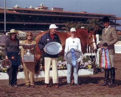 Archie owned by Anchor Farm and Alison Foto Agley Champion Regular Working Hunter 2001 Del Mar National Photo Quince Tree