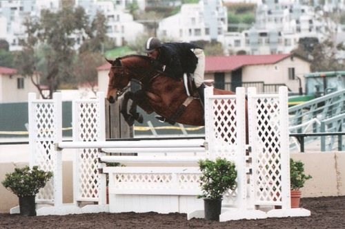 Archie Cox and White Oak owned by Delanie Stone Winner Second Year Green and Regular Conformation Hunters 2007 Del Mar National Photo Cathrin Cammett