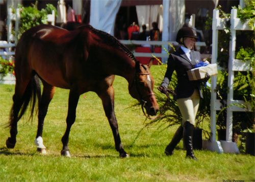 Ashley Pryde and Truly A/O Hunter 2012 Menlo Charity Horse Show Photo Bella Peyser