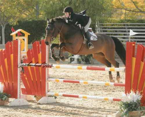 Nicole Hasteltine and Copado owned by Annette Peterfy Champion Modified Junior Amateur Jumper 2012 Los Angeles Season Opener Photo Flying Horse