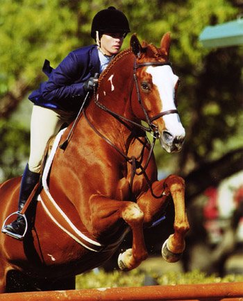 Clearly Canadian owned by Jessica Hagen Top Ribbons Large Junior Hunters 2007 Oaks Blenheim Photo by JumpShot
