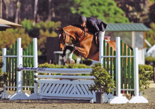 Archie Cox and Back In The Game owned by Laura Wasserman 2011 Blenheim Photo Flying Horse