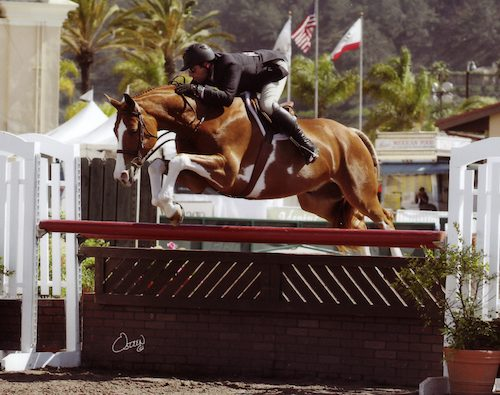 Nick Haness and Ecole Lathrop's Banderas Champion High Performance Hunter_2014 Del Mar National Photo Osteen