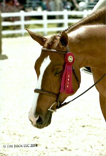 Chelsea Samuels' Adele 2014 Devon Horse Show Photo The Book LLC