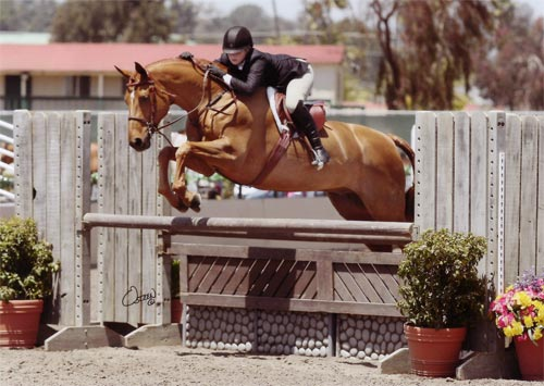 Ashley Pryde and Pringle Grand Champion Small Junior Hunters 2010 Del Mar National Photo Osteen