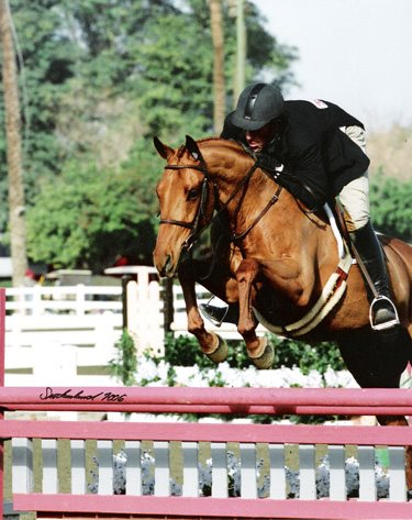 Archie Cox and Show of Hands 2006 HITS Desert Circuit First Year Green Working Hunters Photo Flying Horse