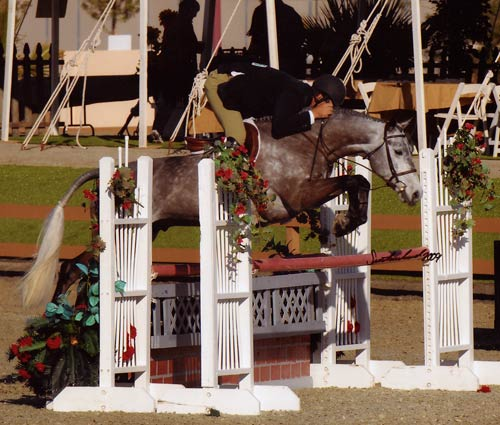 Archie Cox on Glenview owned by Stephanie Danhakl Champion Green Conformation Hunters 2009 HITS Desert Circuit Photo Flying Horse