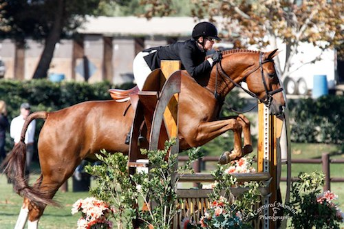 "Gina Ross and Precedent Amateur Owner Hunter 3'3"" 36 & Over 2013 Blenheim Fall Tournament Photo Captured Moment Photography"