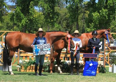 Gina Ross with Appeal and Beckham Champion and Reserve Champion Amateur Owner Hunter 2016 Menlo Charity Horse Show Photo Deb Dawson
