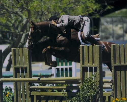 John French and Andiamo owned by Janie Andrew 2007 Champion 2nd Year Green Hunters Photo Jumpshot