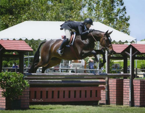 Virginia Fout and Toronto Low Amateur Owner Hunter 2014 Blenheim June Classic Photo Amy McCool