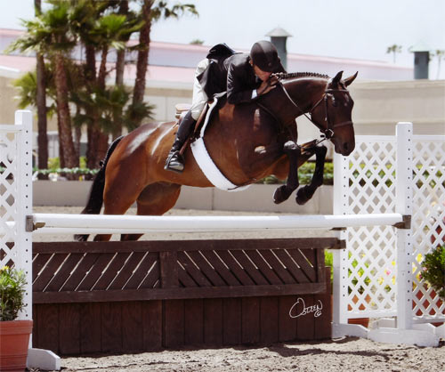John French and After Five owned by Stephanie Danhakl Champion 1st Year Green Working Hunters 2010 Del Mar National Photo Osteen