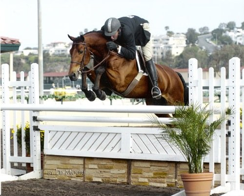 Archie Cox and White Oak owned by Delanie Stone Zone 10 Champion Regular Conformation 2007 Del Mar National Horse Show Photo Ed Moore