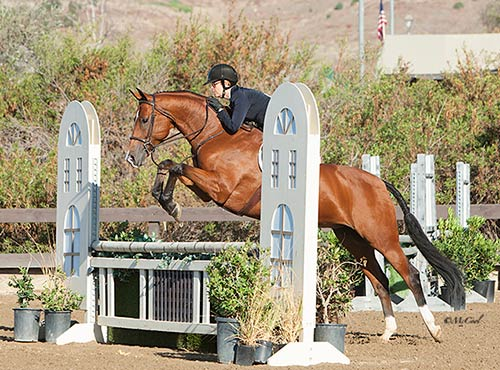 Gina Ross and Equity Champion Amateur Owner Hunter 2016 Blenheim Fall Tournament Photo Amy McCool