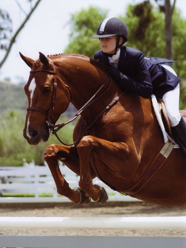 Lucy Davis and Red Rooster Champion Small Junior Hunters 2008 Showpark Ranch & Coast Photo Laurie Weiner