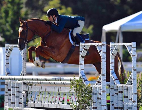 Nick Haness and Appeal owned by Gina Ross 1st Year Green Hunter 2016 Menlo Charity Horse Show Photo Alden Corrigan