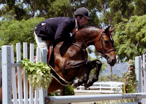 Archie Cox and Truly owned by Ashley Pryde Champion Regular Working Hunters 2008 Showpark Racing Festival Photo Captured Moment