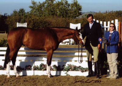 Archie Cox handling Outstanding Best Young Horse 2009 Blenheim Spring Classic III Photo Flying Horse