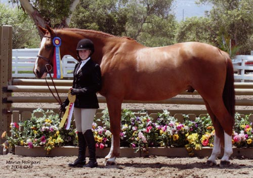 Ashley Pryde and Wesley Champion Small Junior Hunters 2008 Showpark Photo Captured Moment