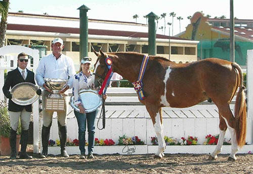 Ecole Lathrop's Banderas Champion High Performance Hunter 2015 Del Mar National Photo Osteen
