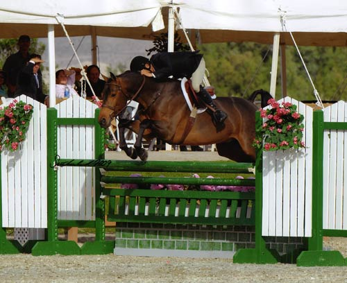 John French on Scout owned by Carolyn Clark-Morrison Circuit Champion Regular Working Hunters 2009 HITS Desert Circuit Photo Flying Horse