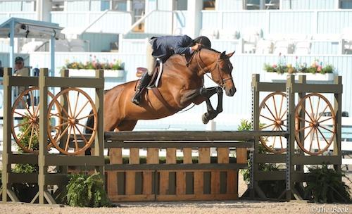 Laura Wasserman's Boss ridden by John French 1st Year Green Hunter 2015 Devon Horse Show Photo The Book LLC