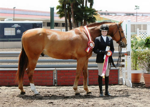 Lily Blavin and Sander Reserve Champion Small Junior Hunter 15 & Under 2013 Del Mar National Photo Osteen