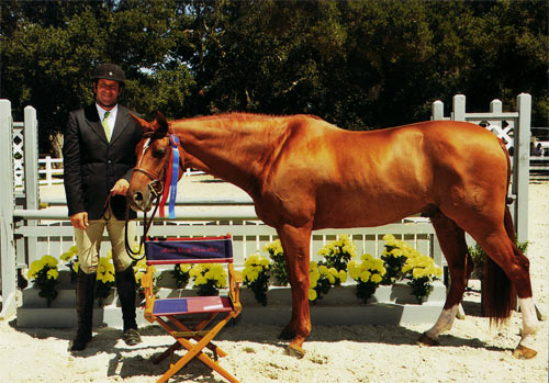 "Archie Cox and Pringle owned by Lily Blavin Champion 3'3"" Performance Hunter 2012 Menlo Charity Photo JumpShot"