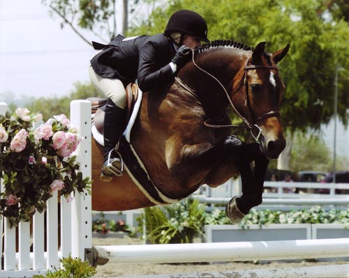 Ashley Pryde and Truly Large Junior Hunters 15 & Under 2008 Showpark Ranch & Coast Photo Captured Moment