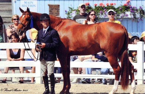 John French and Pringle Winner 1st Year Green 2008 Devon Horse Show Photo Randi Muster