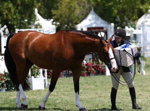 Laura Wasserman and Safari Amateur Owner Hunter score of 97! 2015 Menlo Charity Horse Show