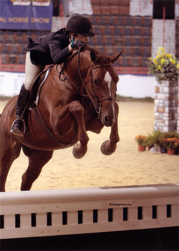 Alex Arute and Red Rooster Small Junior Hunters 2009 Pennsylvania National Photo Al Cook