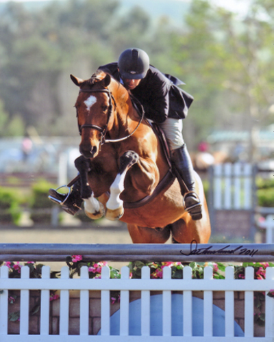 Archie Cox and Back In The Game owned by Laura Wasserman Blenheim 2011 Photo Flying Horse