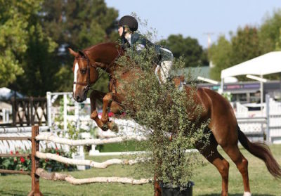 Hunter Siebel and Pure Abundance Champion Large Junior Hunter 2015 Menlo Charity Horse Show