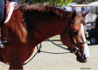 Adele owned by Chelsea Samuels 2012 Menlo Charity Horse Show Photo Bella Peyser