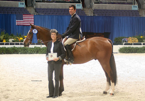 Peter Lombardo and Perfection owned by Ashley Pryde Green Conformation Under Saddle 2008 Washington International Photo Al Cook