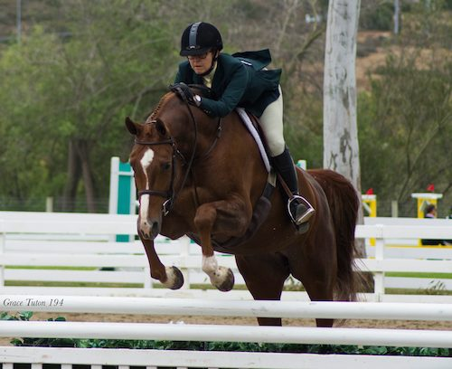 Gina Ross and Appeal Amateur Owner Hunter 2015 Showpark Photo Grace Tuton