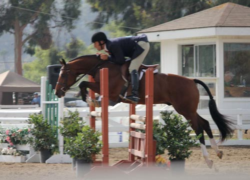 Archie Cox and Beckham owned by Gina Ross Champion Regular Conformation Hunter 2011 Showpark of San Diego