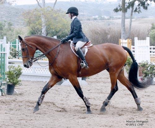 Daphne Harrington and Piper Equitation, 12-13 2011 Showpark Ranch & Coast Photo Captured Moment