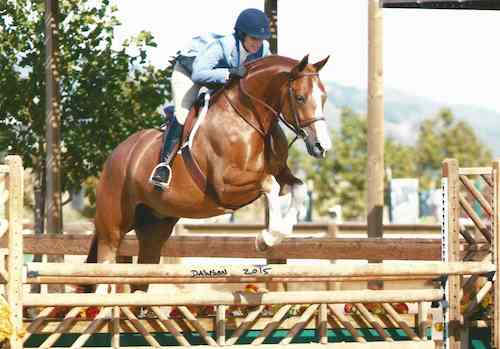 Ecole Lathrop and Banderas Low Adult Hunter 2015 Giant Steps Charity Classic Sonoma Horse Park Photo Deb Dawson