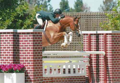 Nick Haness and Banderas owned by Ecole Lathrop Champion High Performance Hunter 2015 Giant Steps Charity Classic Sonoma Horse Park Photo Deb Dawson