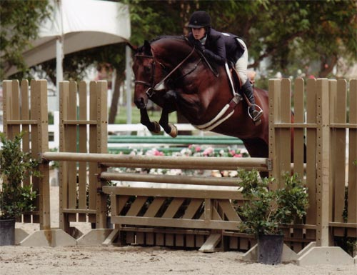 Sydney Calloway and In Sync owned by Stephanie Danhakl Large Junior Hunters 15 & Under 2010 Showpark Photo Horse in Sport