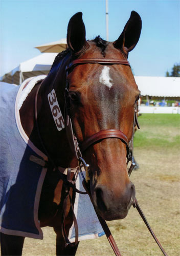 Truly owned by Ashley Pryde 2012 Menlo Charity Horse Show Photo Bella Peyser