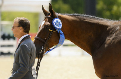 John French and Laura Wassermans Skyhawk Winners of the 2017 USHJA International Hunter Derby Championship Lexington KY Photo McMillen