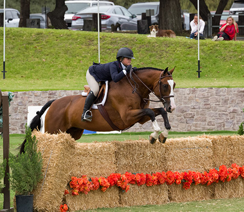 Stella Wasserman and Fine Design 2017 Junior Hunter Finals