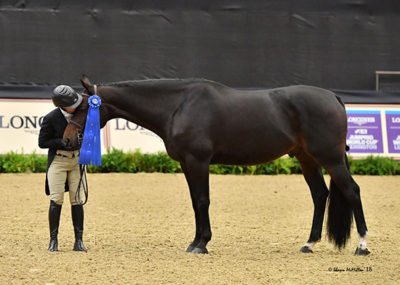"Virginia Fout and Carma 2018 National Horse Show Amateur Owner Hunter 3'3"" Over 35, Champion Photo by The Chronicle of the Horse"
